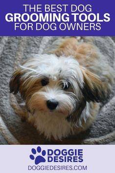 You may be struggling to figure out what are the best dog grooming tools. Here's the best dog grooming tools for dog owners. Harrier Dog, Dog Grooming Tools, Puppy Grooming, Really Cute Dogs, Havanese Dogs, Dog Care Tips, Pet Care, Grey Hound Dog, Types Of Dogs