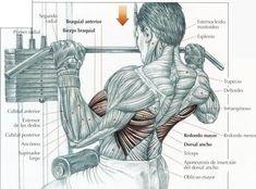 Ejercicios de espalda – todo tipo de ejercicios para la espalda