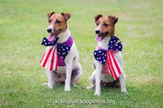 Georgia Jack Russell Rescue, Adoption and Sanctuary |Molly and Polly