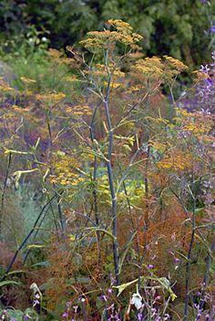 Image result for Foeniculum vulgare 'Purpureum' Round Border, Foeniculum Vulgare, Planting, Bobby, Magic, Google, Kitchen, House, Gardens
