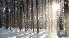 Snowfall From Trees Stock Footage - HD Video 564709 - Clipcanvas Snow Forest, Long Shot, Winter Scenery, Best Stocks, Winter Beauty, Hd Video, Stock Footage, Nature, Outdoor