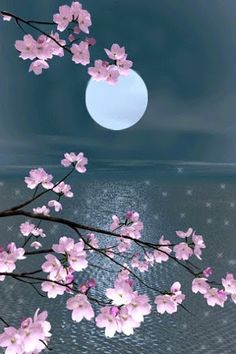 Cherry blossom by the moon Moon Pictures, Nature Pictures, Beautiful Pictures, Beautiful Moon, Beautiful World, Beautiful Flowers, Beautiful Scenery, Stars Night, Moon Dance