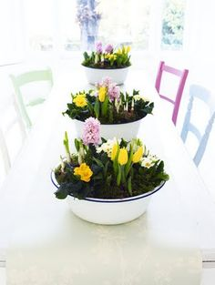 Planted centerpieces