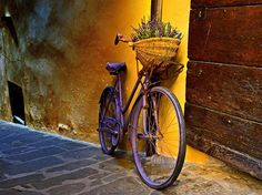 Picture of a bicycle with lavender in the basket, Montepulciano, Tuscany, Italy. National Geographic:: photo of the day
