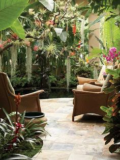 patio  garden tropical  color, whatever those hanging plants and moss are!
