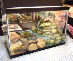 nice example of a small half and half aquarium Small Turtle Tank, Turtle Tank Setup, Small Turtles, Baby Turtles, Turtle Tanks, Aquatic Turtle Tank, Turtle Aquarium, Aquatic Turtles, Turtle Pond