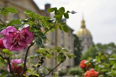 Roses in the famous gardens of Musée Rodin in Paris, France