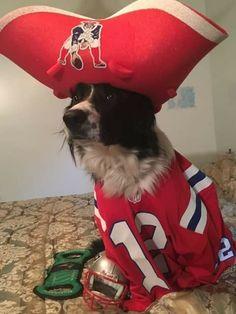 6cc90ff82eb 26 Best New England Patriots Pets images | Patriots fans, Go pats ...
