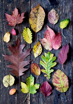 Beautiful leaves of all shapes and sizes.  Do you have trees that turn colors in your yard?