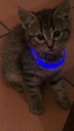 Celebrating new years kitty :)