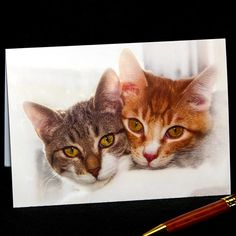 Best Friends Forever, Hdr, Photo Greeting Cards, Menu, Thankful, Etsy Shop, Digital, Cats, Animals