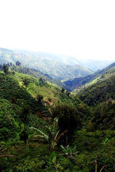 Jamaican countryside.