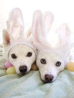 Victoria's Easter bunnies!