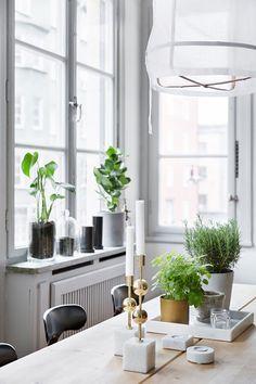 Fönstret och de gröna växterna