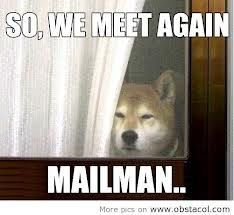 I've always wondered why dogs don't like mailmans