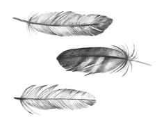 Love Feathers!