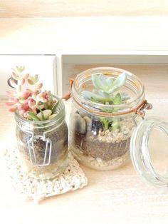 diy terrarium pour succulentes en bocal en verre 1