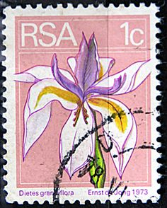 Republic of South Africa.  DIETES GRANDIFLORA.  Scott 408 A167, Issued 1973 Nov 11,  Photogravured & Engraved, Perf. 12 1/2, 1c. ldb.
