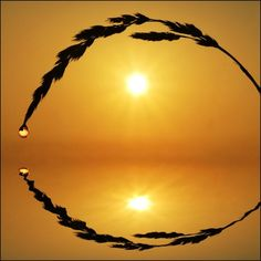 The Sunny Wreath | Amazing Pictures