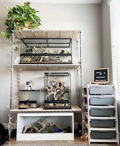 Fish Tank Terrarium, Reptile Terrarium, Aquarium Fish Tank, Reptile House, Reptile Room, Reptiles, Crested Gecko, Aquarium Design, Animal Room
