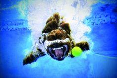 Seth Casteel: Hunde unter Wasser