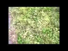 Uno De Los Videos Mas Impresionantes De Ovnis febrero 2014