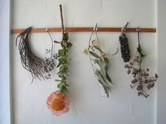dried local plants life