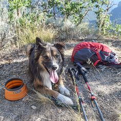 [Tips for Hiking With Dogs, from Guest Instagrammer @mirandashea24] The number one tip I give everyone when hiking with dogs is to keep your dog hydrated! You may think that's super obvious, but I see way too many people on trails with their dog looking like it could really use a drink. More than once I've offered my dog's bowl and water to a thirsty trail pup. I can't stress this enough! Especially on a hot day, make sure you're taking more water breaks. Know the signs of dehydration: Dry…