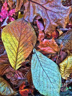 Leaf Formations ~ Rockwood Park ~ Delaware ~ Fine Art Photography by Todd Breitling ~ toddbreitling.com