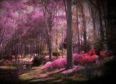 Spring Gardens Outdoor Photography, Spring Garden, Country Roads, Gardens, Plants, Scenery, Outdoor Gardens, Plant, Nature Photography