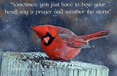 THE CARDINAL IN WINTER