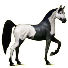 łata,  Koń czystej krwi arabskiej Gniada - Howrse