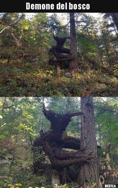 Demone del bosco.. Wtf Funny, Funny Memes, Beautiful World, Beautiful Places, Cool Illusions, Arte Disney, Fantasy Story, Unusual Art, Weird Creatures