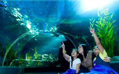 Siam Ocean World Bangkok Aquarium Ticket with 5D Theatre at Siam Paragon Aquarium    Siam Ocean World with 5D Cinema: Experience this innovative movie magic with the ultimate, state of the art technology combining sound, vision, sensations and practically
