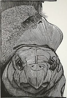 Barry Moser : The Griffin and the Mock Tortoise at Davidson Galleries