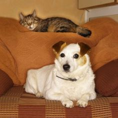 As a pet sitter, I believe it is not only my job to care for a client's pets but also to be a resource for them. - Read more at PetsitUSA . . .