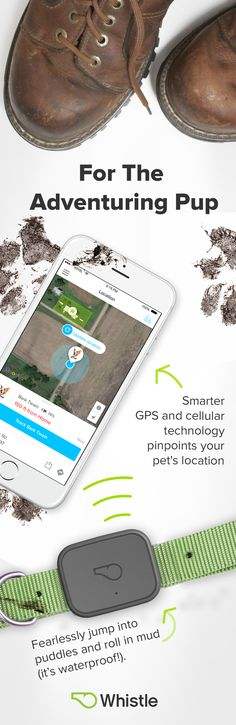 Meet Whistle 3, the all-in-one pet tracker with advanced location & activity tracking. There's a smarter way to keep your pet healthy & safe.