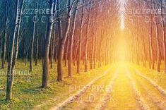 Royalty Free (RF) Photos / Vectors / Ready Made Logos / by BuzzPixelStock Road through a beautiful spring forest at sunrise Spring Forest, Photography For Sale, Sunrise, Country Roads, Stock Photos, Beautiful, Sunrises