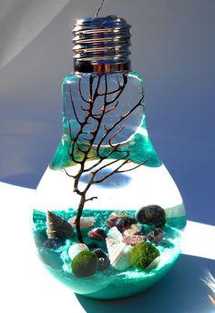 Marimo terrarium lightbulb terrarium Aqua by EclecticZenMarimo