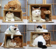 Cats like boxes :)))