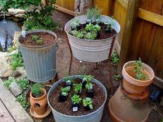 Escolha vasos mais profundos para alecrim (Rosmarinus officinalis), que tem maior porte.
