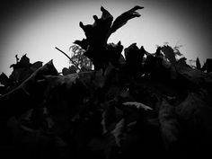 Just some creepy dead leaves... What more can I say?