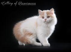 Эту очаровашку, я надеюсь, буду видеть часто :) Красотка неимоверная…: tessochka