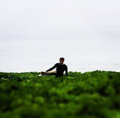 Sea of green. ||  @cliff_photo Waiakea Ohana Matt Hoffman