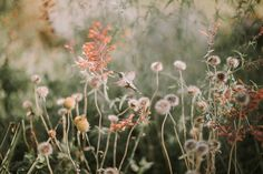 Flutter by Justyna Butler on the CMpro Daily Project, a group photography blog for photographers