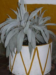 Planta de la región en el Parque del Río Neusa, Cundinamarca.
