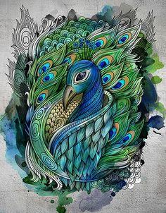 Hand drawn peacock, computer color art