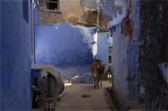 Bundi (India) Blue City, Places Ive Been, Spaces, Explore, World, Travel, Painting, Art, India