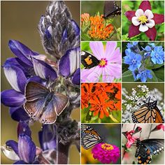 Package of 3000 Seeds Bird and Butterfly Wildflower Mixture 100 Pure Live Seed NonGMO Seeds by Seed Needs -- Click image to review more details.