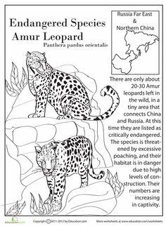 Worksheets: Endangered Species: Amur Leopard